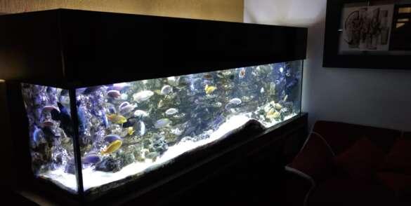 dep-aqua-ecofish31