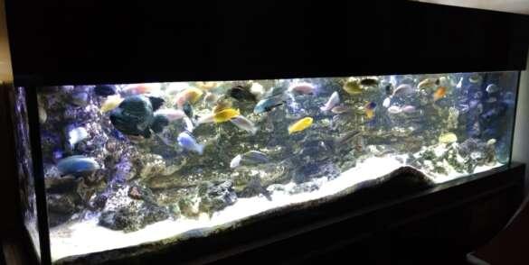 dep-aqua-ecofish32