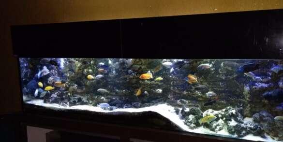 dep-aquecofish33